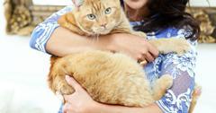 Jillian_Harris_Tidy_Cats