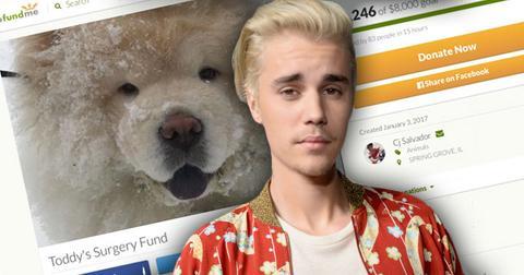 Justin bieber abandons dog todd go fund me
