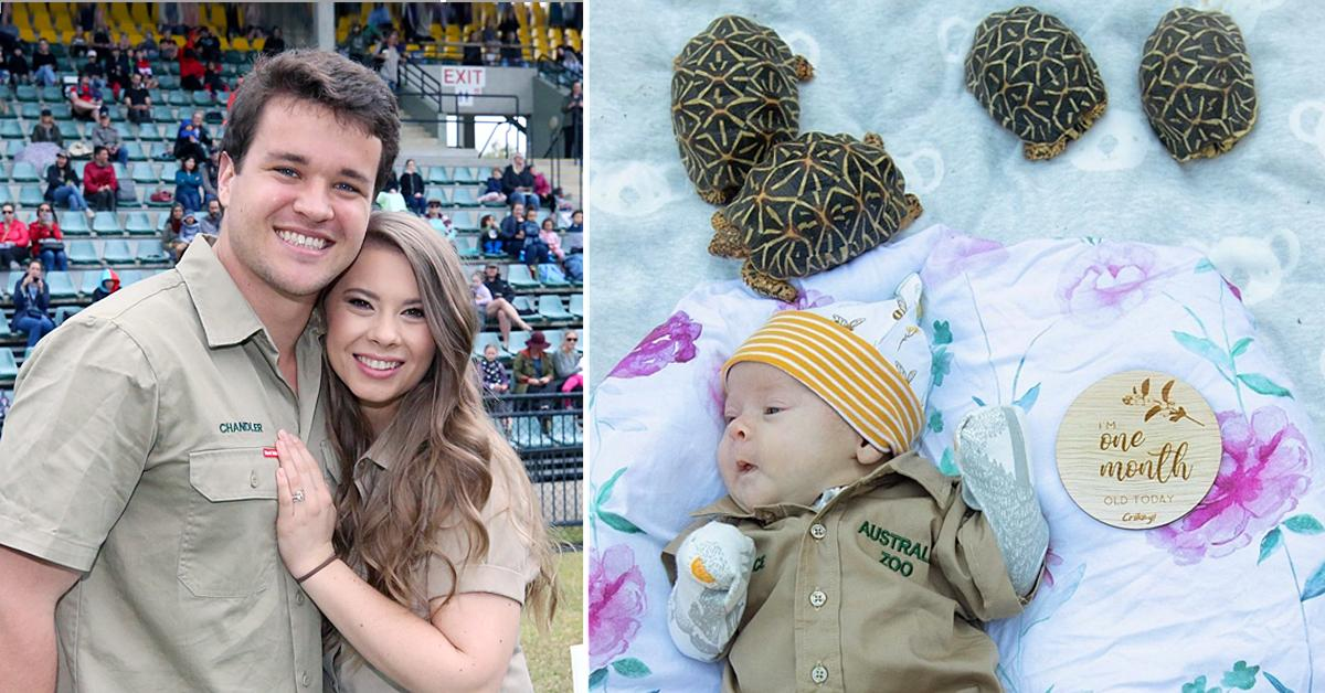 bindi irwin celebrates grace warrior one month milestone video tortoises