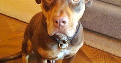 Gisele Bündchen Tom Brady Dog