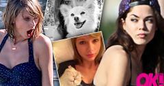 Calvin harris ex girlfriend before taylor swift aarika wolf instagram