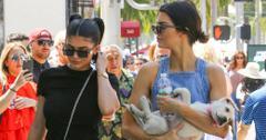 Caitlyn Jenner Dog Kendall Kylie Photos Long