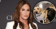 Caitlyn Jenner Dogs Destroy Home PP