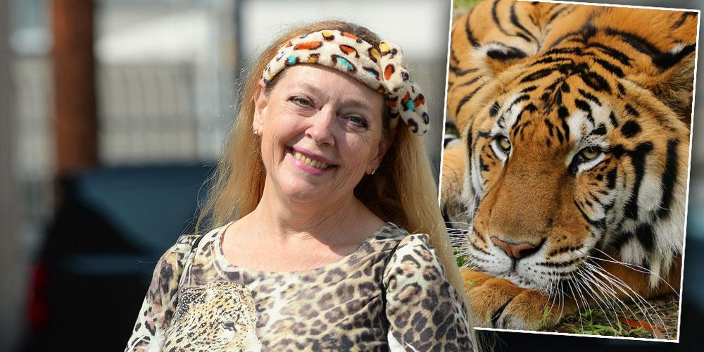 Carol Baskin Speaks Out After Tiger Seriously Injures A Volunteer