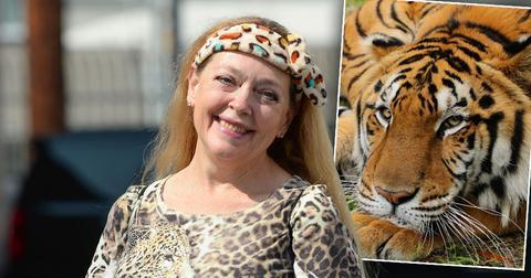 Carol Baskin Speaks Out After Tiger Seriously Injures A Volunteer