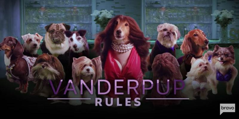 Vanderpump Rules Dog PP