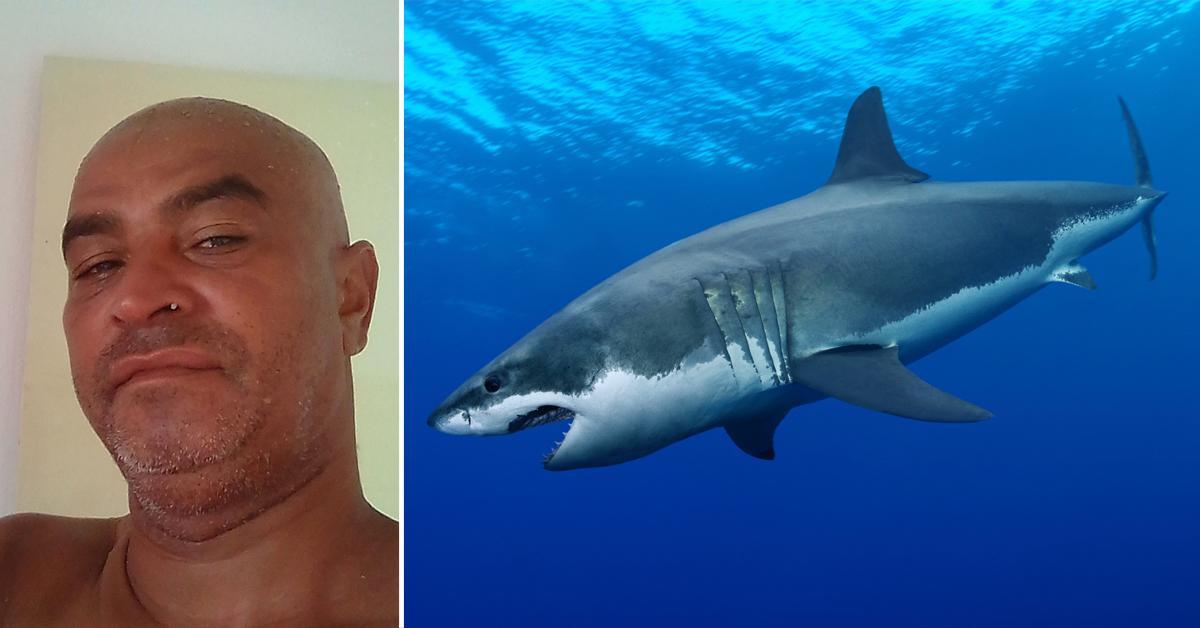drunk man killed shark relieve himself warning signs refrain ocean