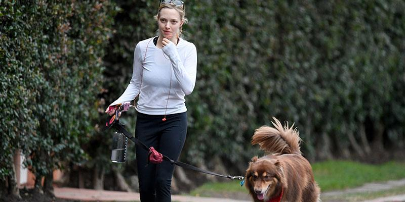 Amanda seyfried dog hike main
