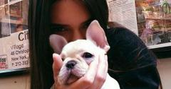 Hailey Baldwin, Kendall Jenner and Jaden Smith shop for $2,500 puppies.