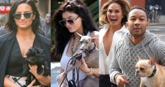 Celebrity Animal Lovers