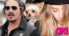 Johnny depp spent 10 million amber heard dog