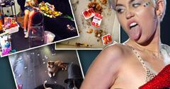 Miley cyrus (1)