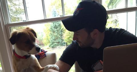 chris evans moment he met rescue dog video pp
