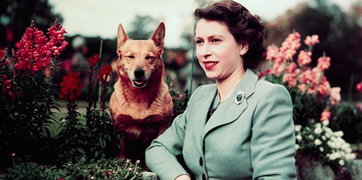 Last of queen elizabeths royal corgis dies