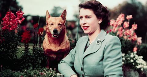 Last of queen elizabeths royal corgis dies