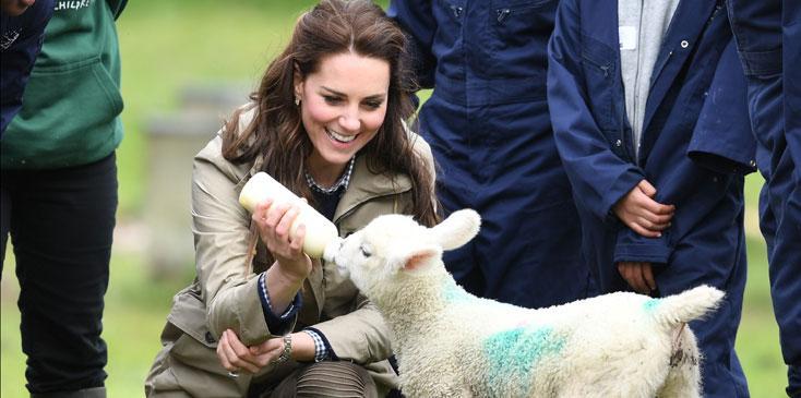 Kate Middleton Baby Lamb Photos Long