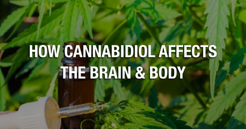 How Cannabidiol Affects The Brain & Body