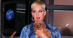 Katy perry dog post pic final