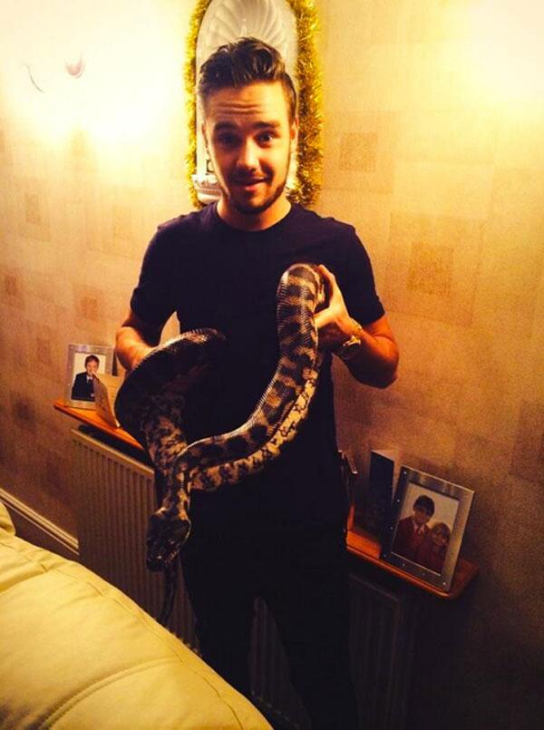 Liam Payne Snake
